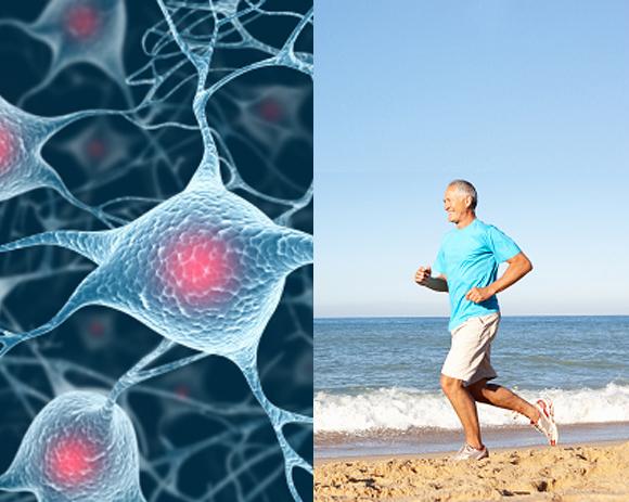 Fitnesstraining – Schützt die grauen Zellen